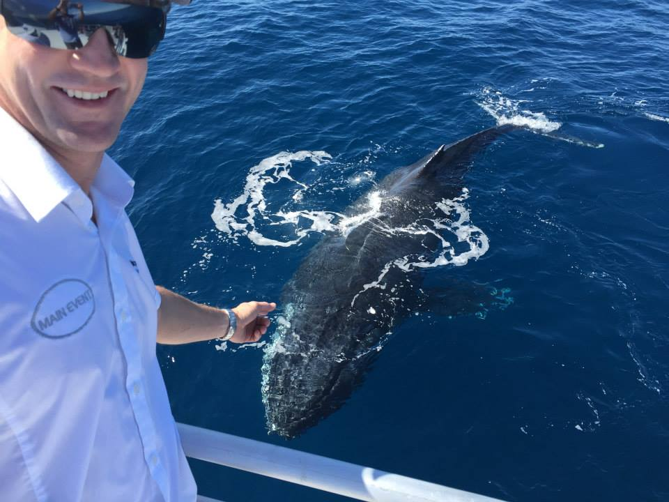 Australia Whale Experience 1 - Premier Whale Watching Service Queensland