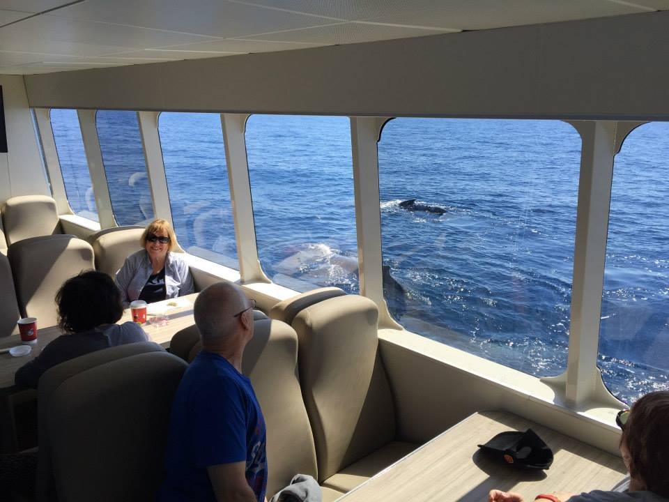 Australia Whale Experience 3 - Premium Whale Watching Tours Queensland