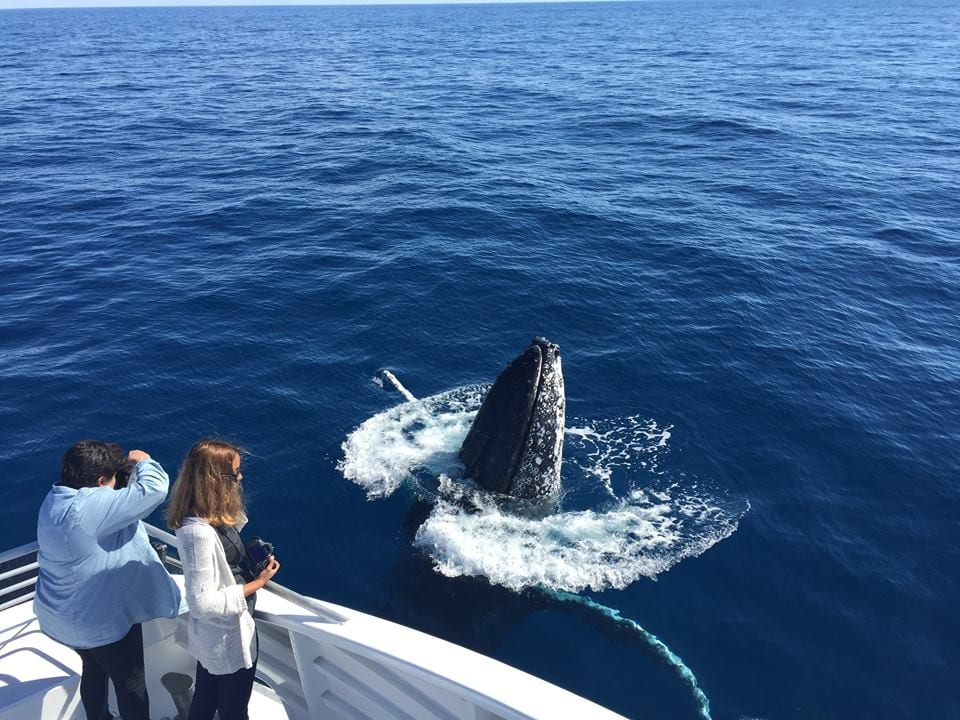 Australia Whale Experience 4 - Southern Great Barrier Reef