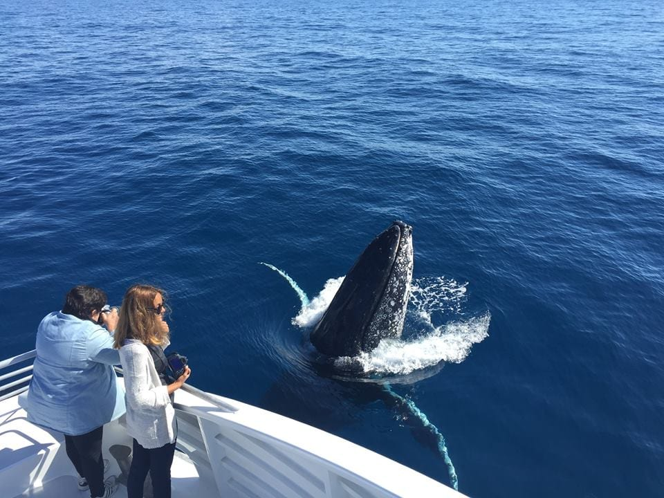 Australia Whale Experience 6 - Luxurious Whale Watching Service