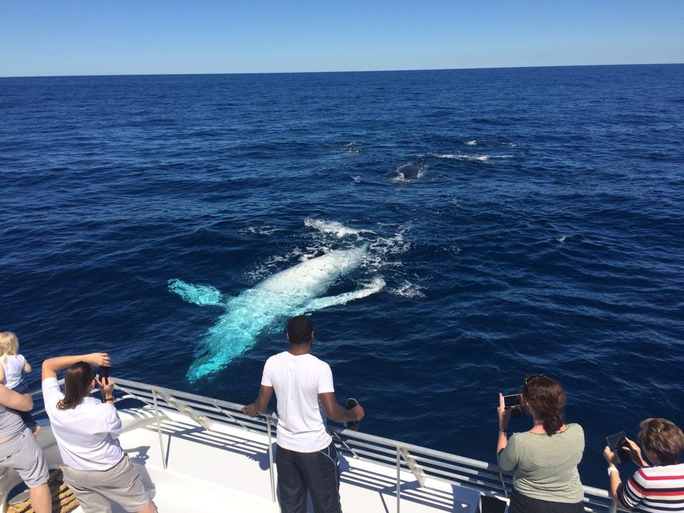 Australia Whale Experience 7 - Day Reef Tours Queensland