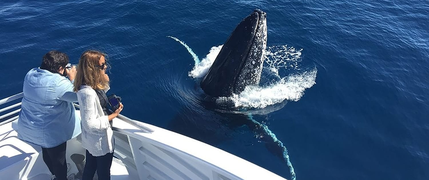 Australia Whale Experience - Great Barrier Reef Queensland