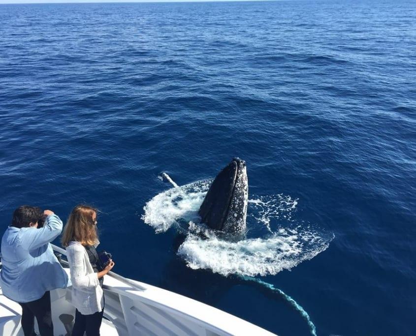 Guests Watching Whales Bundaberg - Ladies watching whales in Bundaberg, Queensland.